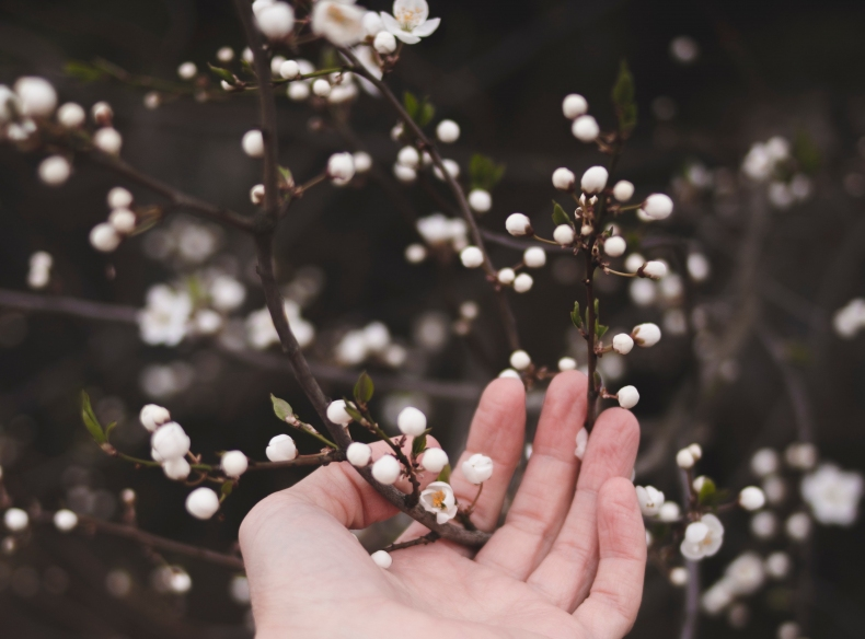 apple-blossom-beautiful-blossom-2106702.jpg